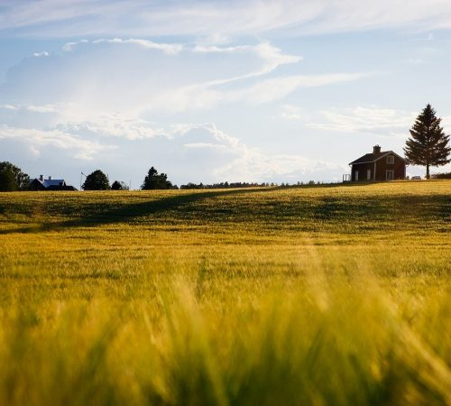agriculture, blur, countryside